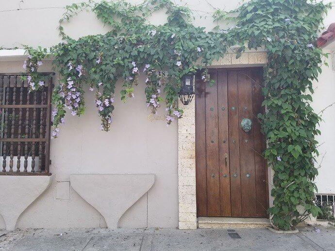 door climbing plants